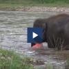 El elefante rescató al hombre en peligro.
