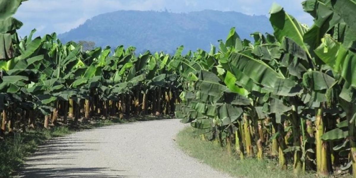 De varios balazos asesinan a hombre en Zona Bananera.