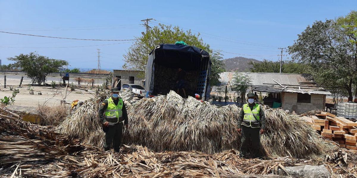 Eran transportadas en un vehículo tipo camión sin el permiso correspondiente.