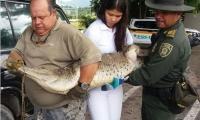Caimán capturado por Policía Ambiental