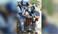 Los animales callejeros también están siendo censados y vacunados, con la ayuda de voluntarios animalistas.