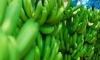 El cultivo de banano será uno de los temas más importantes en Expoagrosavia 2019