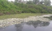 La mortandad de peces se registra en el desembocadura del río Fundación.