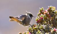 El Magdalena se destaca por su riqueza en especie de aves