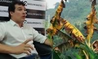 José Francisco Zúñiga, presidente de Asbama, aclara mitos sobre el hongo que afecta cultivos en La Guajira.