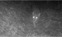 Jaguar avistado en la cuenca del río Gaira.