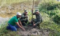Siembra de árboles en Guachaca