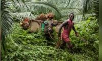 Pueden donar todas las personas naturales y jurídicas que deseen unirse a esta iniciativa y así mismo los cultivadores y productores de aceite de palma y sus empleados.
