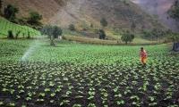 Este encuentro virtual del agro habilitó desde el 18 de agosto una Vitrina Virtual donde los participantes buscarán consolidar acuerdos comerciales