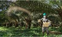 Actualmente, el aceite de palma participa con 64 % del mercado total de aceites y grasas del país.