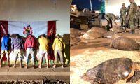 41 tortugas marinas fueron rescatadas.