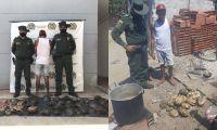 Policía capturó a un hombre por sacrificar 31 hicoteas en zona rural de Pivijay.