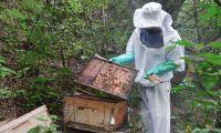 El uso de plaguicidas genera constantemente mortandad de abejas