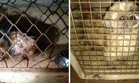 Animal rescatados por la Fiscalía.