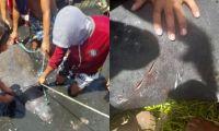 la manatí fue capturada por pescadores en tasajera