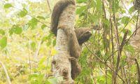 Para la Corporación es prioridad la conservación de la biodiversidad del Magdalena
