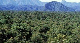 Por la cero deforestación, Fedepalma y la Fundación para la Conservación y el Desarrollo Sostenible firman convenio de cooperación.