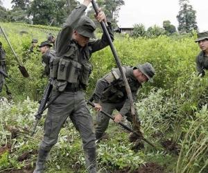 Erradicación de cultivos ilegales en el sur de Colombia.