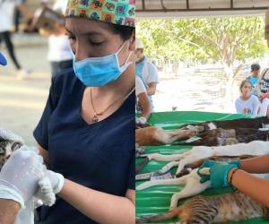 Esterilización de perros y gatos en Santa Marta