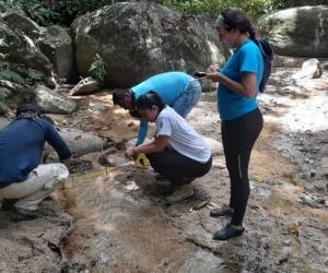 Los guardabosques se encuentran trabajando en el Parque Nacional Natural Tayrona.