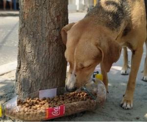 Defensores de los animales buscan ayuda para seguir alimentándolos.