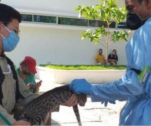 Jornada de Vacunación canina y felina en la Secretaría de Salud.