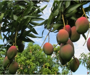 En el Magdalena hay cuatro municipios Pdet, que son: Ciénaga, Fundación, Aracataca y el distrito de Santa Marta.