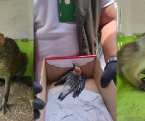Algunas de las especies rescatadas.