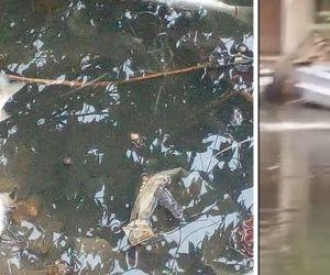 Vertimiento de aguas negras en el río Manzanares.