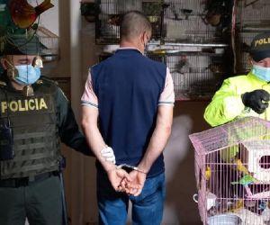 En Medellín fue capturado un hombre por presunto tráfico de fauna silvestre.