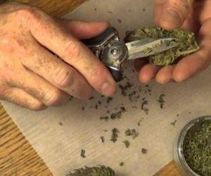 Consumo cannabis.