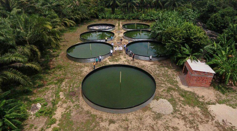 Con la siembra de 32 mil alevinos y la entrega del proyecto explotación intensiva de Tilapia Roja se beneficiarán 219 productores.