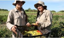 En la actualidad, el 44 % de los emprendimientos beneficiados por Fondo Emprender han sido para mujeres de 597 municipios del país.