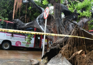 El árbol cayó sobre 2 buses, dos taxis y tres carros particulares.