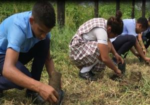 La siembra de árboles se hizo en el municipio de Salamina.